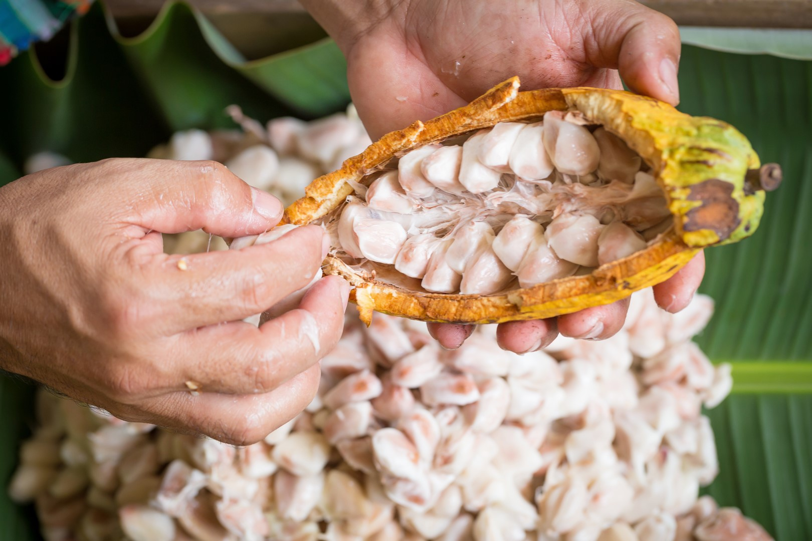 1400 v.Chr. – Cacaobonen als betaalmiddel