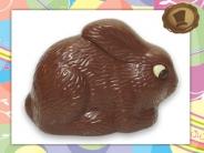 Chocolade  Dwergkonijn